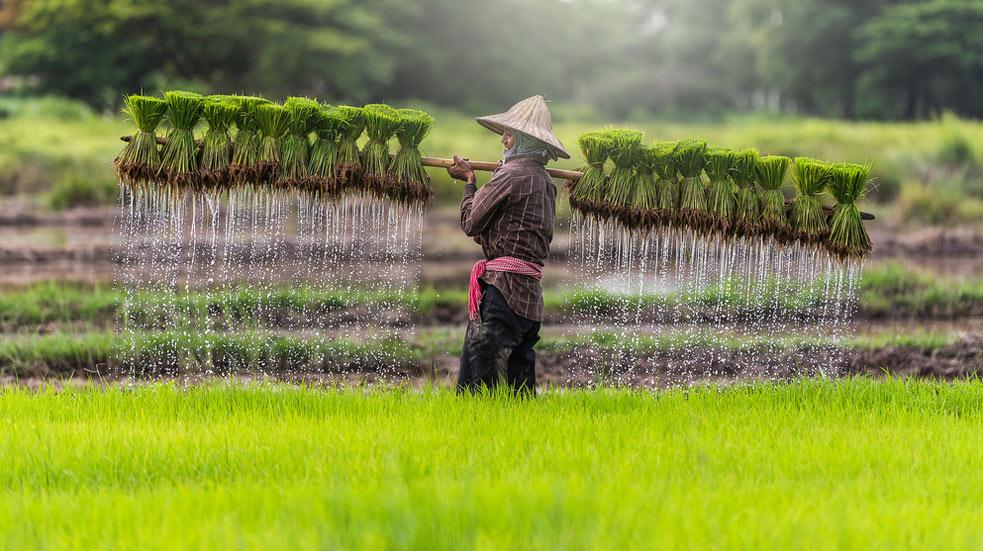 Co dělat ve Vietnamu